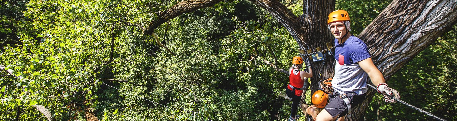 Descente d'un très grand arbre par des adultes
